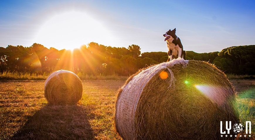 Best dog breeds to have on the farm
